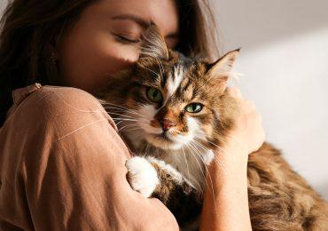 Cuatro beneficios de tener gatos comprobados por la ciencia