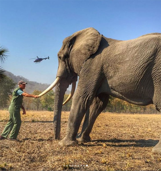 Foto del elefante y la demanda de Harry