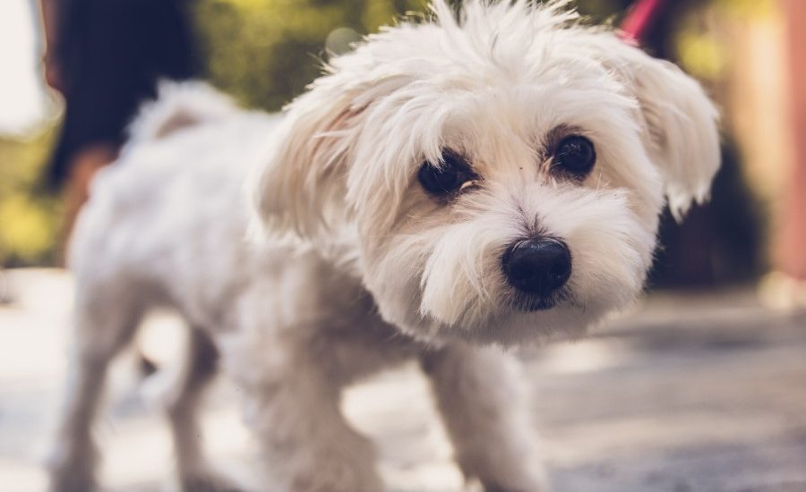 productos desinfectar mascotas