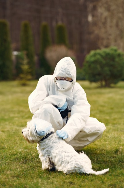 ¡Perritos podrían detectar coronavirus!