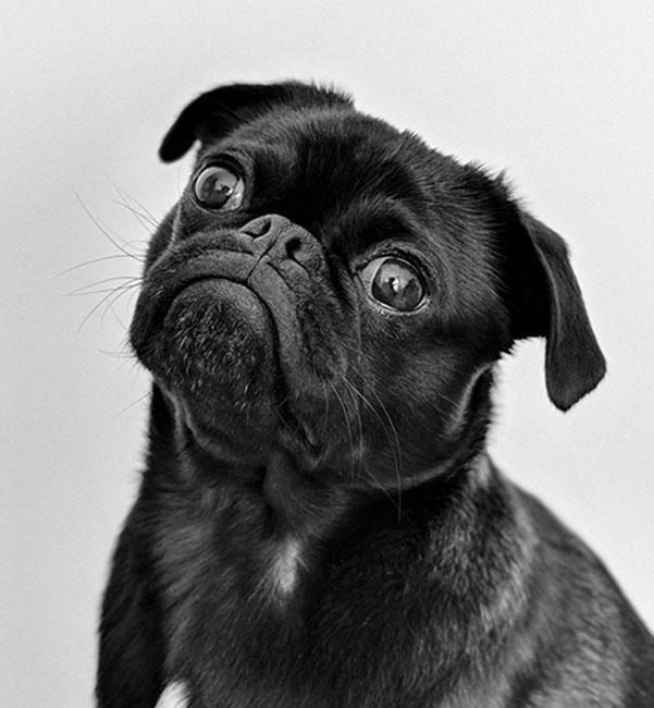 Ayuda a tu perro a liberar el estrés