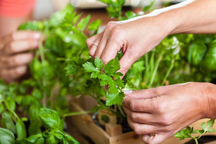 El poder de los alimentos verdes - Perejil