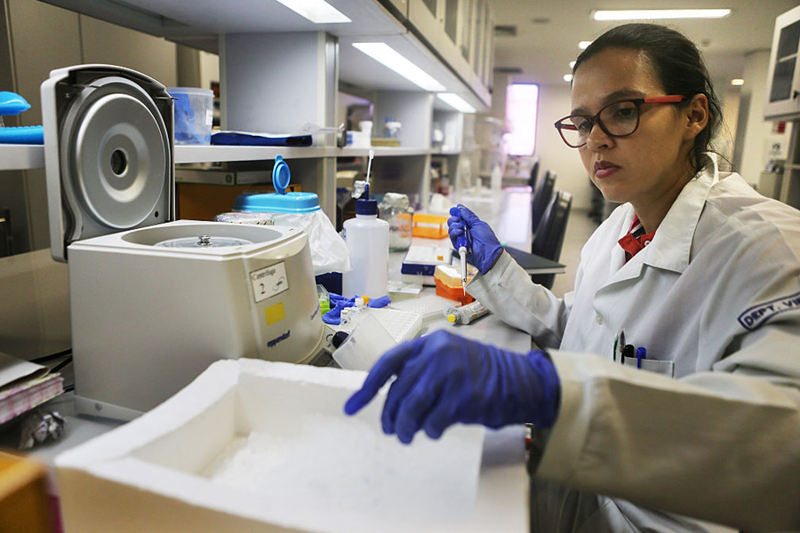 investigación ADN de insectos