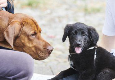 mascotas perros y gatos