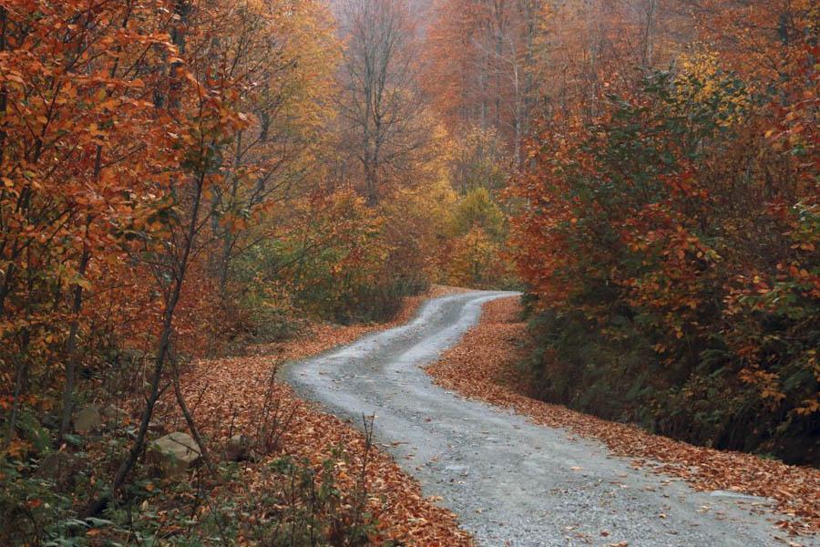 otoño estación del año