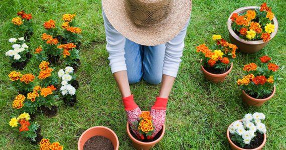 La jardinería, una terapia agradable y permanente