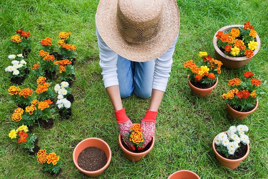 La jardinería, una terapia agradable y permanente ¡la vas a amar!