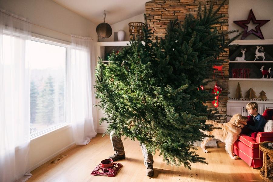Cuándo Se Pone El árbol De Navidad Y Cuál Es Su Significado Vanidades