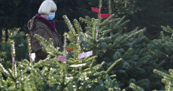 quitar el árbol de navidad