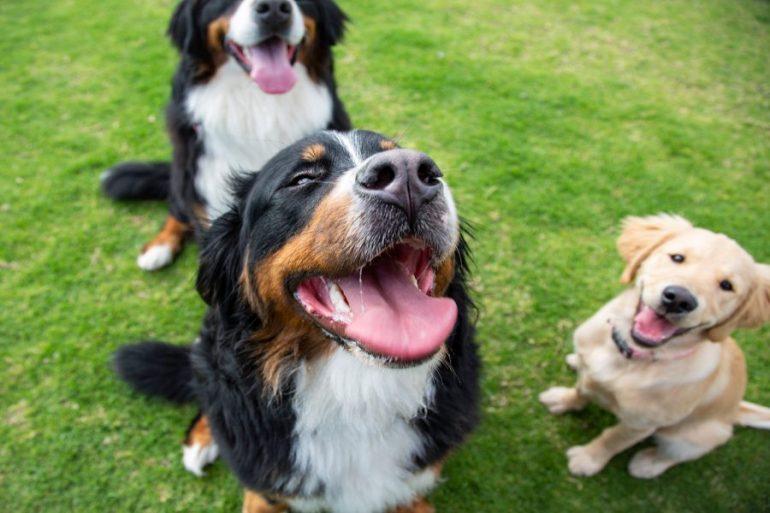 perros para alegrar día