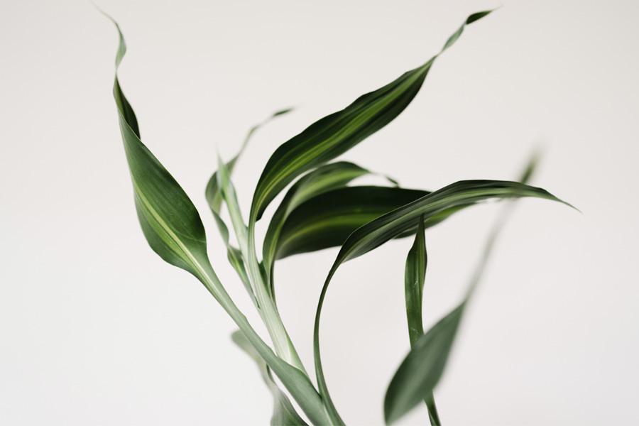 plantas reducen el estrés casa