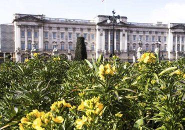 palacio de buckingham primavera