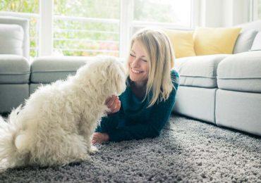 cuidados de una alfombra limpia en casa