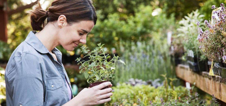 plantas aromáticas hogar