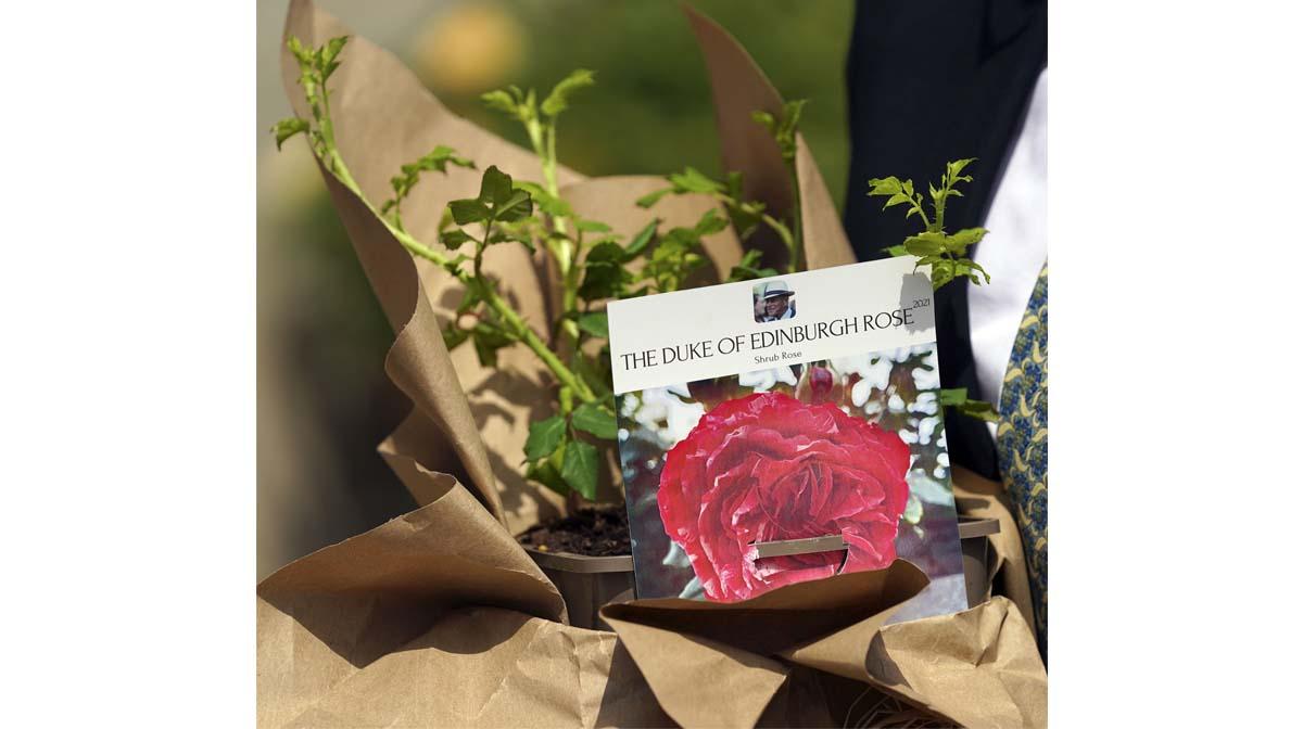 La rosa del duque de Edimburgo: a la reina Isabel II le dieron un significativo regalo por lo que habría sido el cumpleaños 100 del príncipe Felipe.