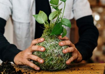 kokedama plantas sin maceta